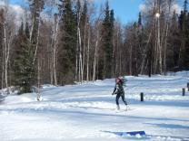 Skier skiing across the trail